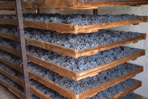 Amarone Drying 1